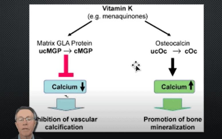 Vitamin K Activates Osteocalcin (to Promote Bone Mineralization) & Matrix Gla Protein (to Inhibit Vascular Calcification)