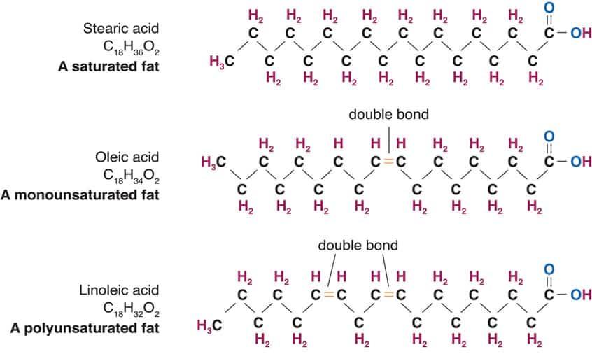 Stearic acid (SFA) vs. oleic acid (MUFA) vs. linoleic acid (PUFA)